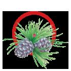 Icon Nadelzweige und Zapfen mit rotem Kreis